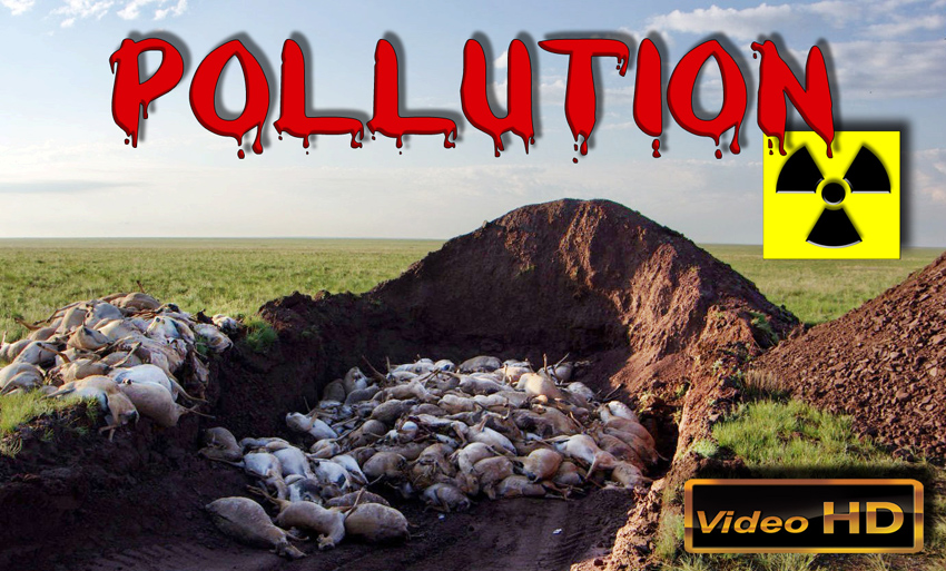 Pollution_mortelle_de_masse_antilopes_saigas_Kazakhstan_06_2015_850.jpg