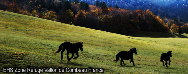 EHS_Vallon_Combeau_Drome_France_IMG_3654_news_650