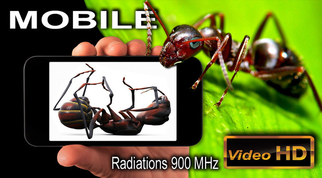 Fourmis_Rayonnement_Telephone_Mobile_flyer_News