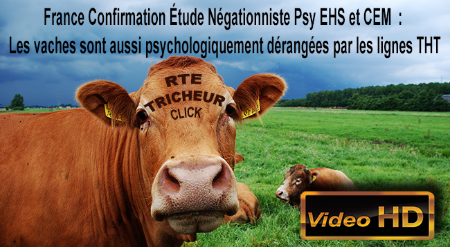 Vaches_Psychologiquement_Derangees_CEM_lignes_THT_28_05_2012_Flyer_News